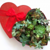 Thumbnail image for Succulent Heart for Valentine's Day