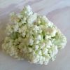 Thumbnail image for Introducing Fioretto — Flowering Cauliflower