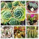 Thumbnail image for Succulents for Beginners (To Get You Started)