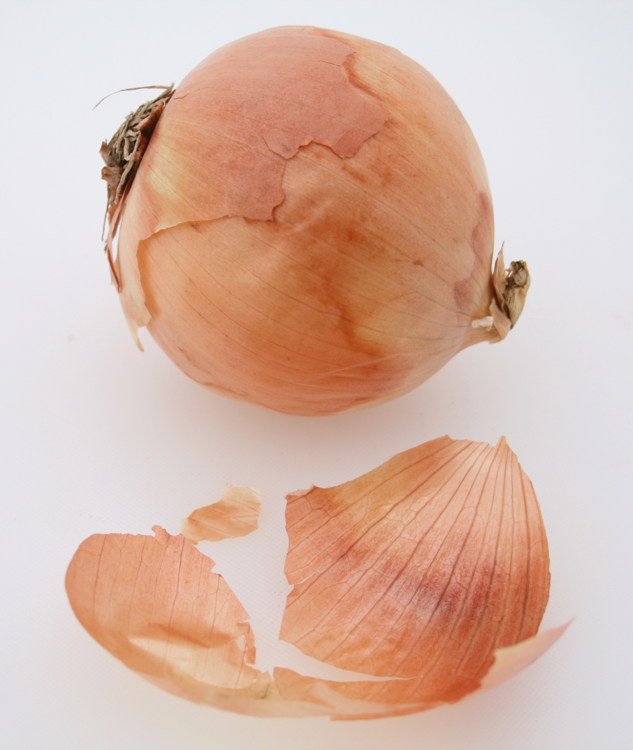 onion epidermis How can the answer be improved.