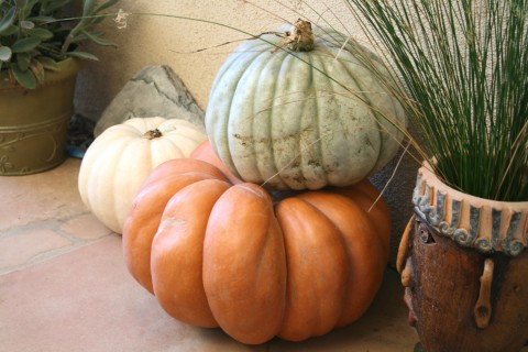 Let Us Give Thanks (a poem) on Shockingly Delicious