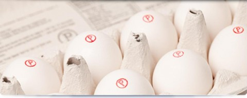 Safest Choice eggs in carton