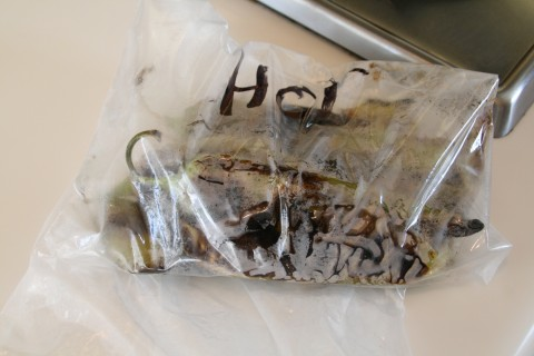 Hatch chiles into a plastic bag