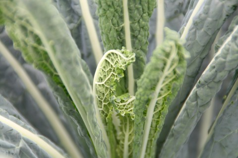 Kale up close