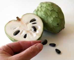 Cherimoya Fruit with seeds