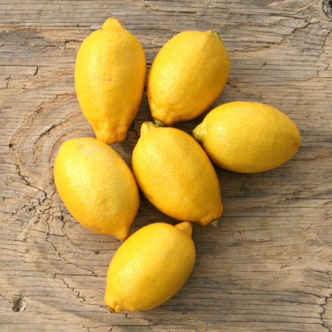 Seedless Lemons from Friedas