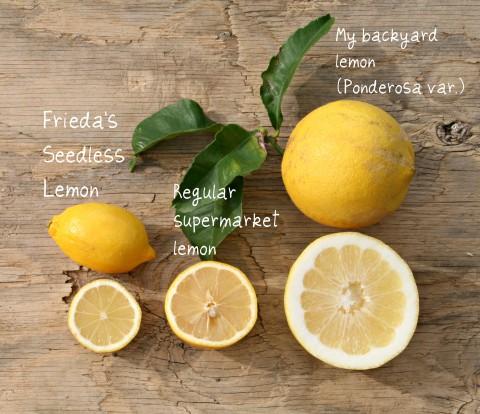 Seedless lemons compared to seeded lemons