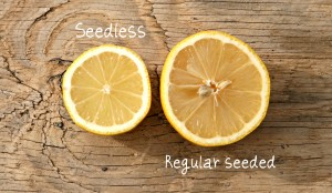 Seedless lemon compared to regular lemon