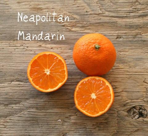 Neapolitan Mandarin
