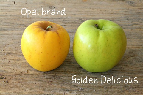 Opal Brand apple compared to Golden Delicious