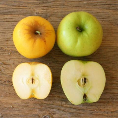 Opal brand apple vs Golden Delicious
