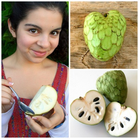 cherimoya is called the ice cream fruit