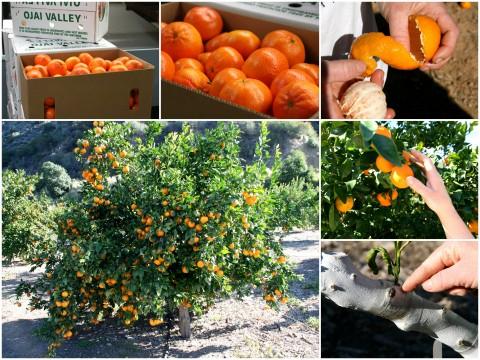 Pixie Tangerine tour collage 1