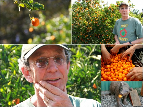 Pixie Tangerine tour collage 2 Churchill Orchard