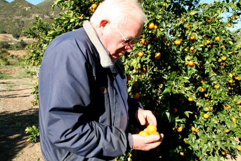 Pixie Tangerine tour Tony Thacher inspects fruit