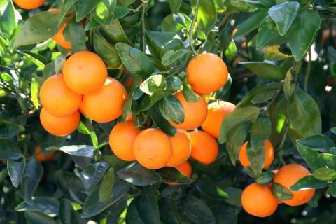 Pixie Tangerine tour