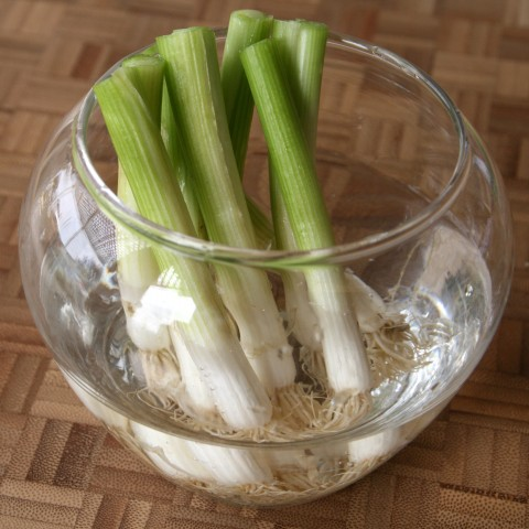 Cut ends of scallions in a bowl of water