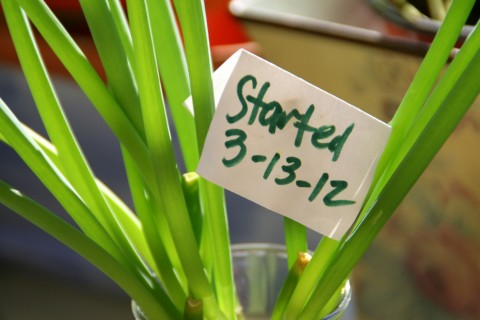 Sign and date on scallions in window