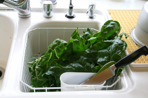 chard draining in sink