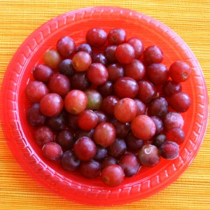 frozen grapes for Yonanas