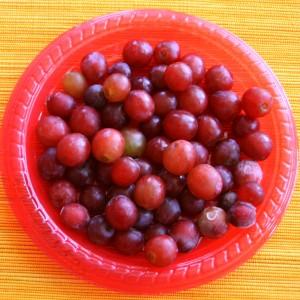 frozen grapes for Yonanas