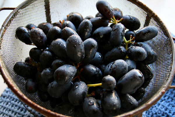 Black Seedless Grapes Black Muscato grapes