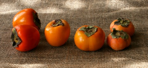 Introducing 4 Persimmons Varieties: http://www.shockinglydelicious.com/?p=10539