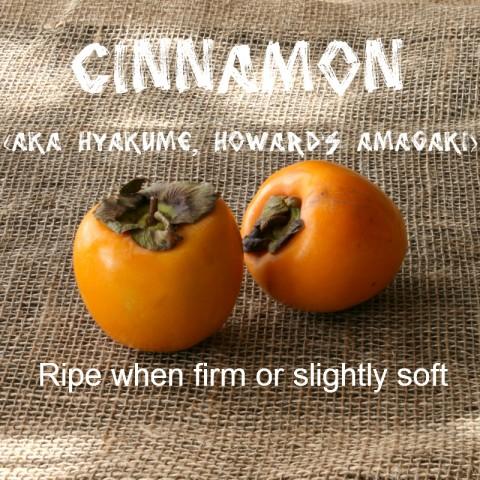 Cinnamon Persimmon: http://www.shockinglydelicious.com/?p=10539
