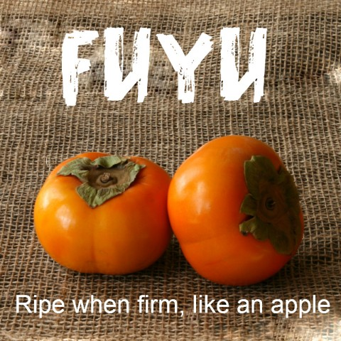 Fuyu Persimmon: http://www.shockinglydelicious.com/?p=10539