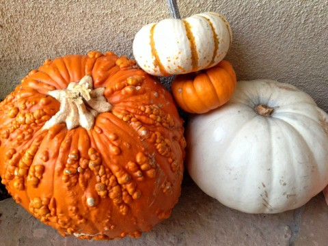 Happy Thanksgiving -- Pumpkin Quartet
