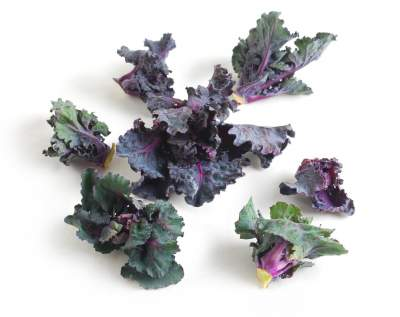 Kale Sprouts on Shockingly Delicious