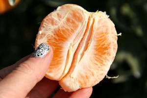 Sumo Citrus in hand on Shockingly Delicious