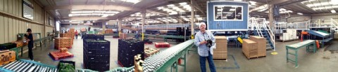 Packing line panorama at Mission Produce on Shockingly Delicious