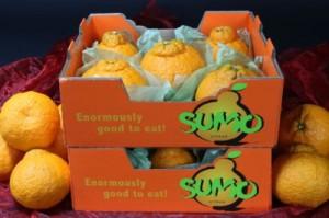 SUMO CITRUS consumer carton