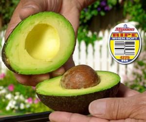 Avocado ripening at Mission Produce