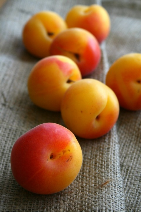 Golden Velvet Apricots on Shockingly Delicious