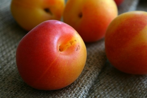 Golden Velvet Apricots on Shockingly Delicious