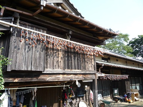 Japanese_Persimmons_drying
