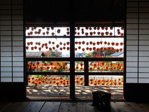 Persimmons drying like a window curtain in Japan on ShockinglyDelicious.com