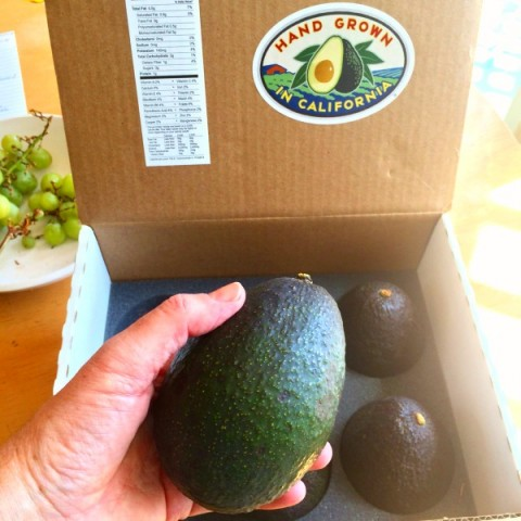 Box of avocados from CaliforniaAvocadosDirect.com