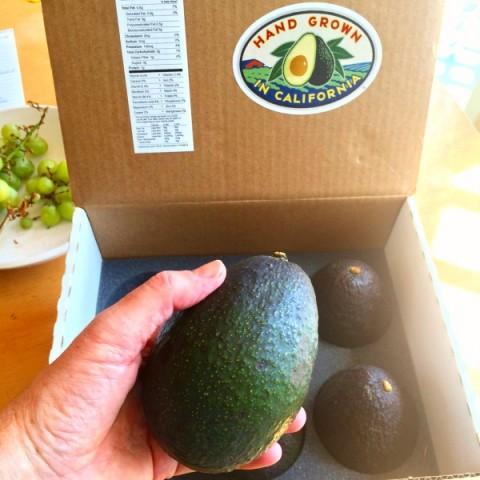 Box of avocados from CaliforniaAvocadosDirect.com