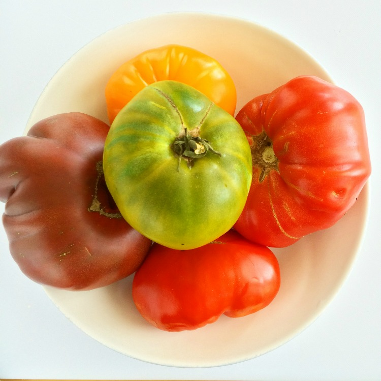 Heirloom tomatoes in a white bowl on ShockinglyDelicious.com