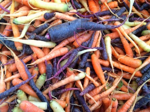 A tangle of fresh carrots at the farmers market on ShockinglyDelicious.com