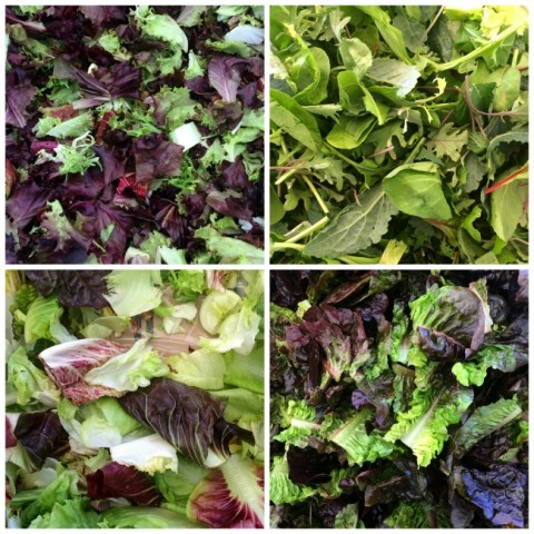 Fresh lettuce mixes on ShockinglyDelicious.com