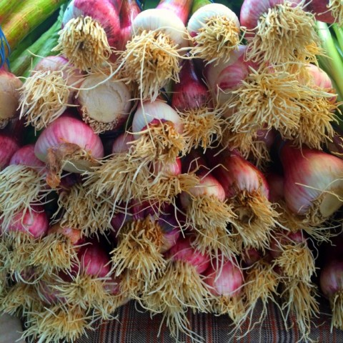 Fresh shaggy onion roots at the farmers market on ShockinglyDelicious.com