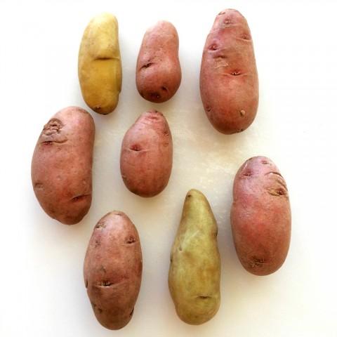 Idaho Potatoes Fingerling Potatoes on ShockinglyDelicious.com