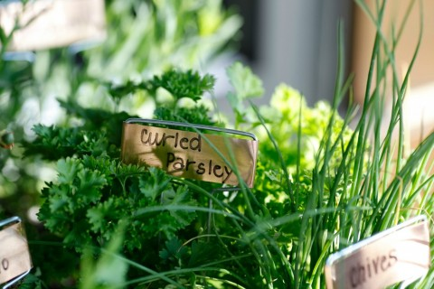 Fresh herbs from True Food Kitchen