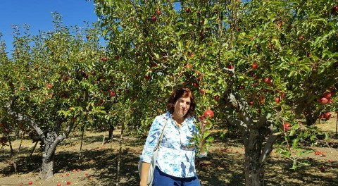 Apple picking in Oak Glen Calif