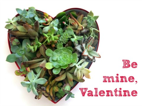 Succulents in a Heart-Shaped Box with Be My Valentine beside it