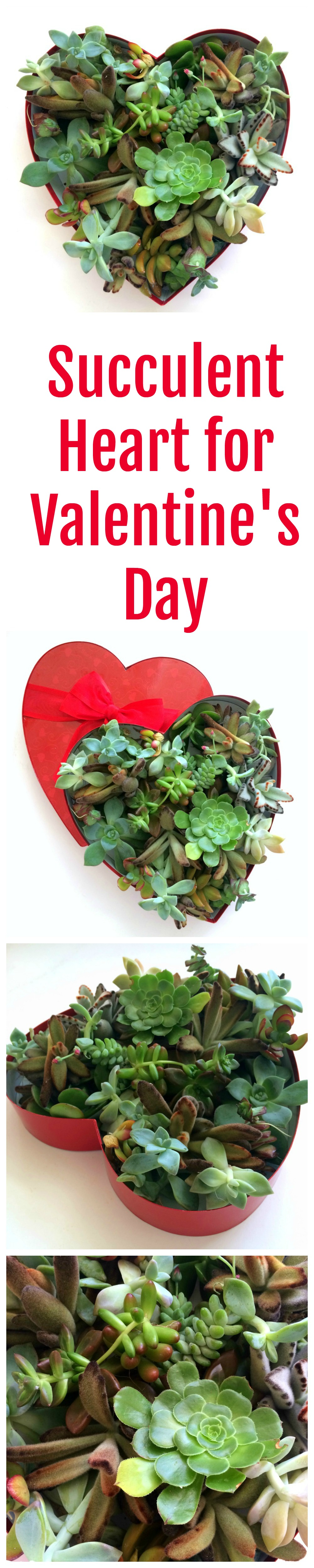 Succulent Heart for Valentine's Day on ShockinglyDelicious.com